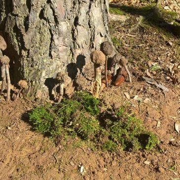 Leckereien im Wald