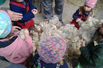 Kuschelweiche Schafe